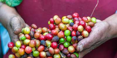 LaMeseta Coffee, Premium Quality Across Continents